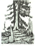 "Carol Gilbert-Wagner ""Arboreal at Crater Lake"""